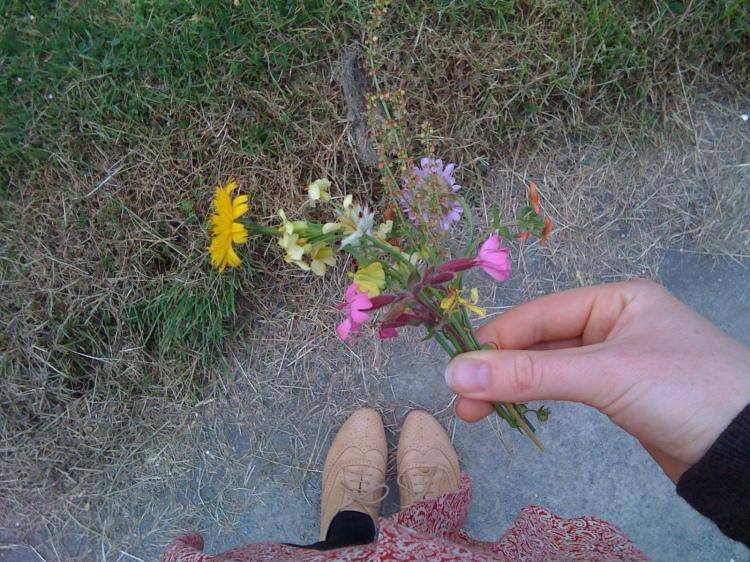 Guernsey Wildflowers