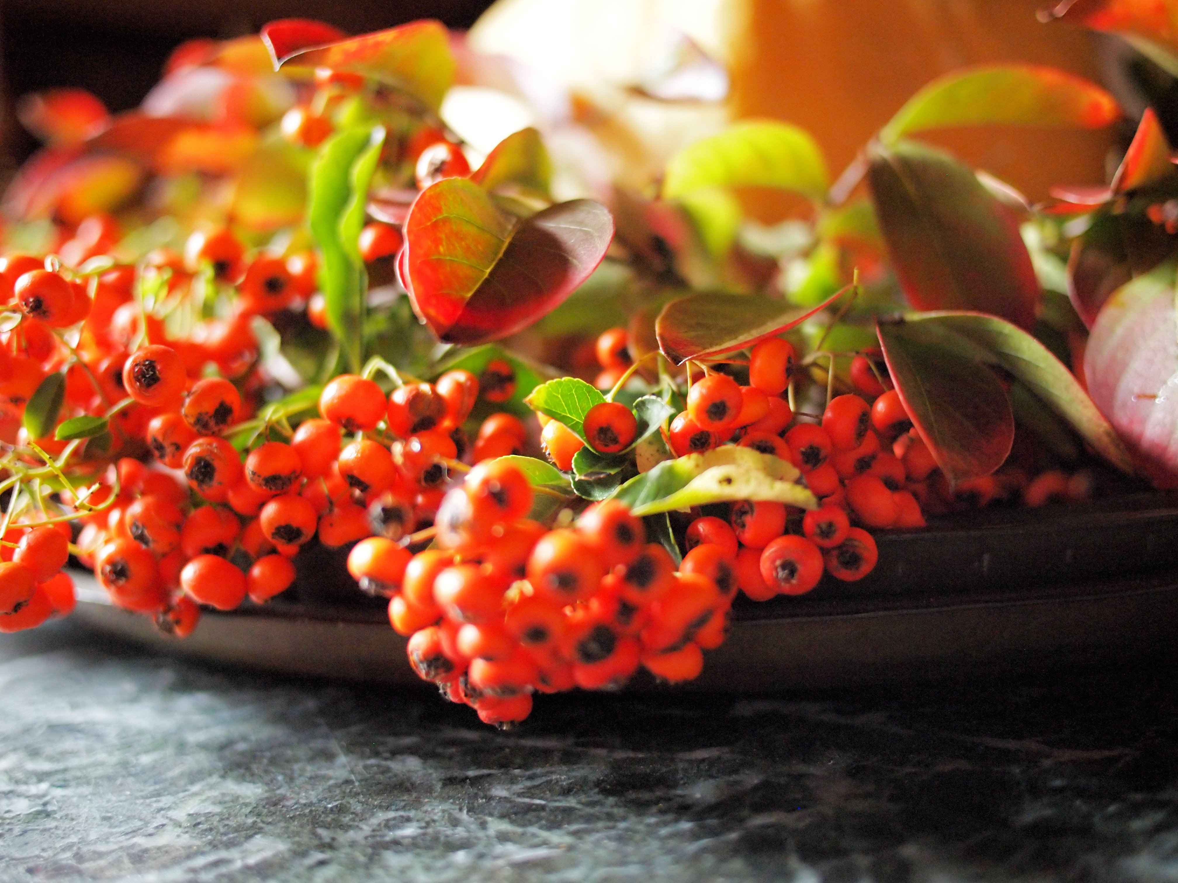 Autumn In Still Life Bringing The Autumn Garden Into Your