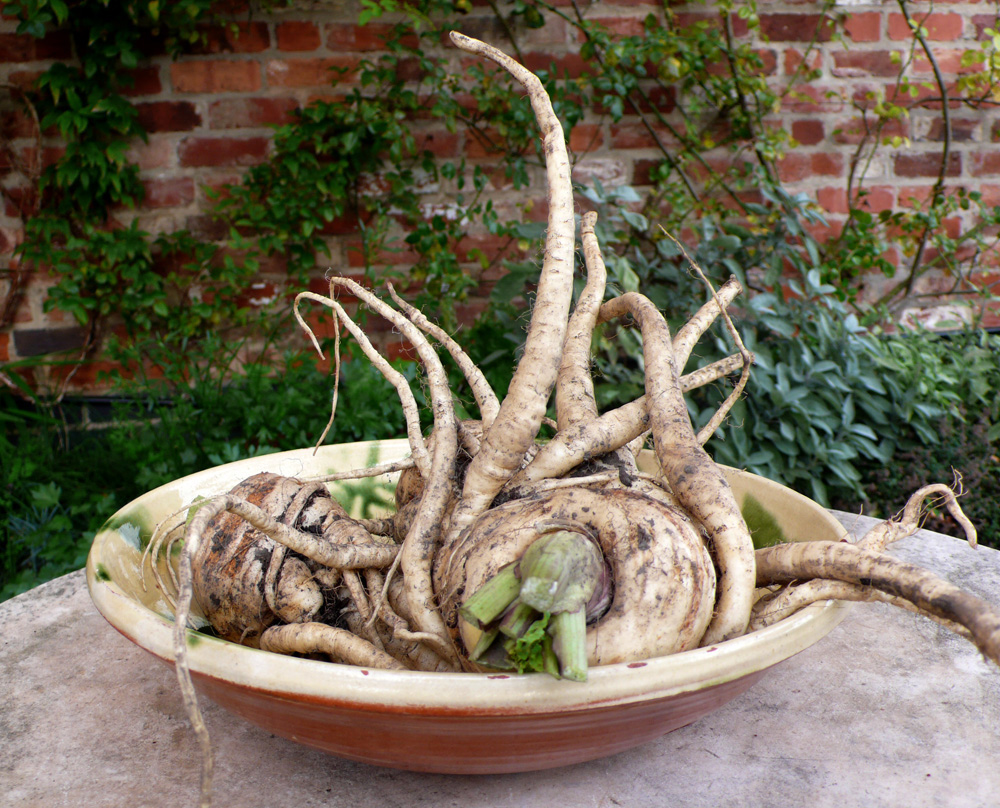 Rooted Parsnips in a bowl