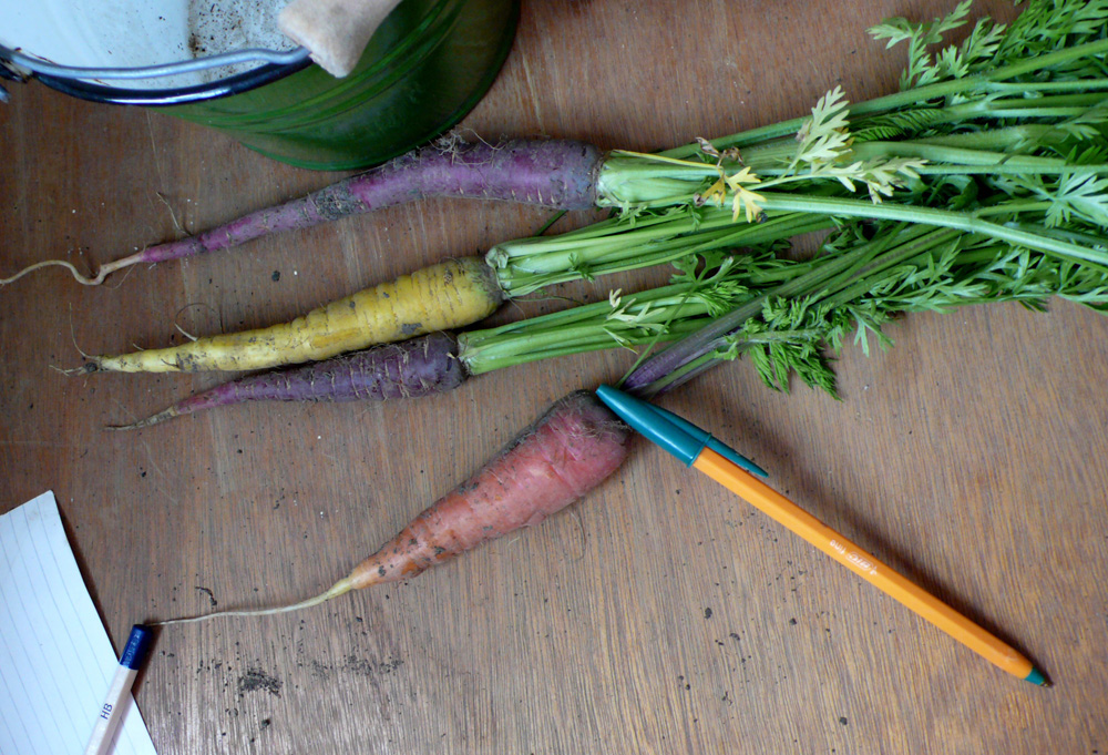 Homegrown Multi-Coloured Carrots