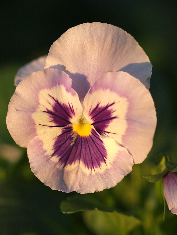 Flickr-Beadmobile-Pansy-1
