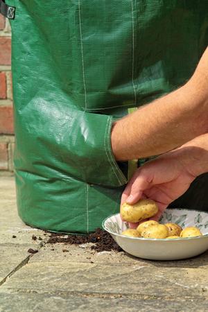 Potato Planters at Sarah Raven