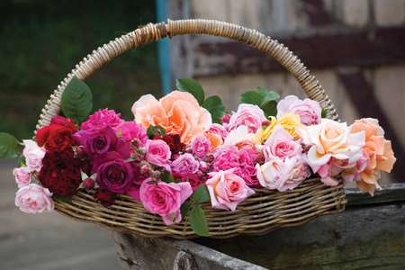 Basket of favourite roses