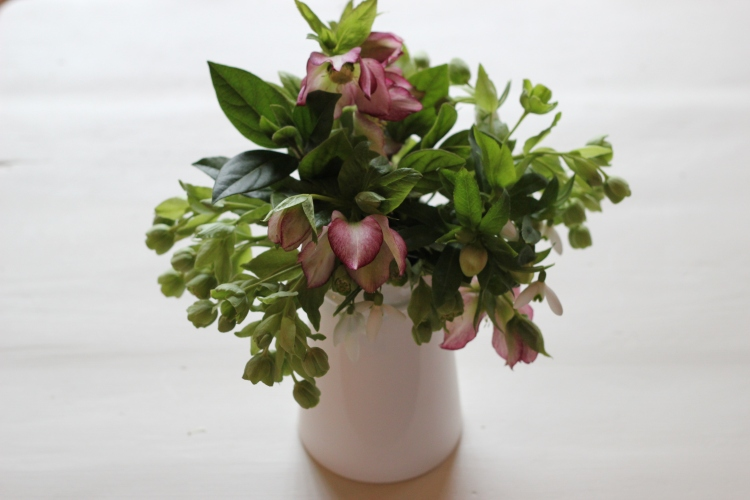 Hellebore arrangement in jug
