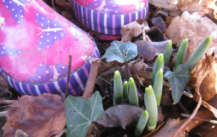 Snowdrops and Wellies