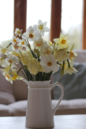 Jug of Daffodils