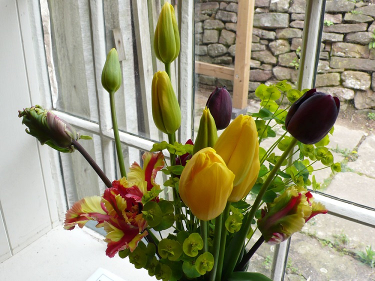 April Tulips by the window