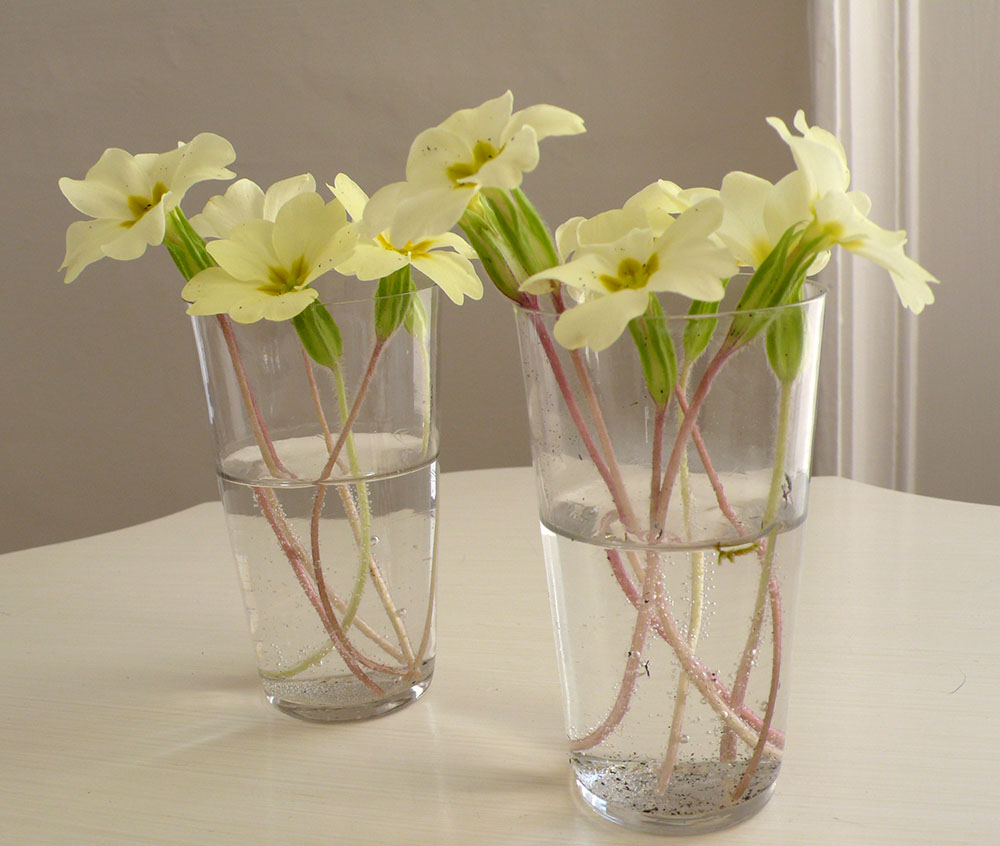 Image result for flowers in the house
