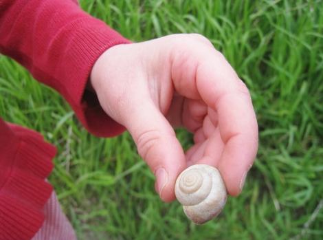 Snailshell in Spring