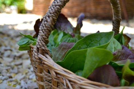Summer Salad Leaves