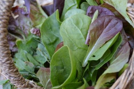 Summer Salad Harvest