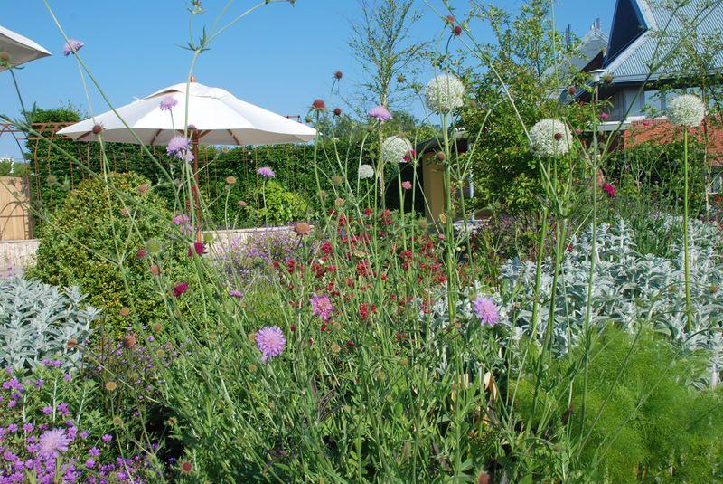 Horatio's Garden in full bloom