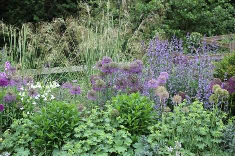 Alliums in the border