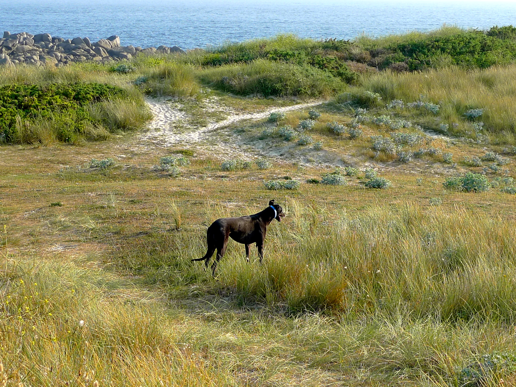 The dog on the beach in France