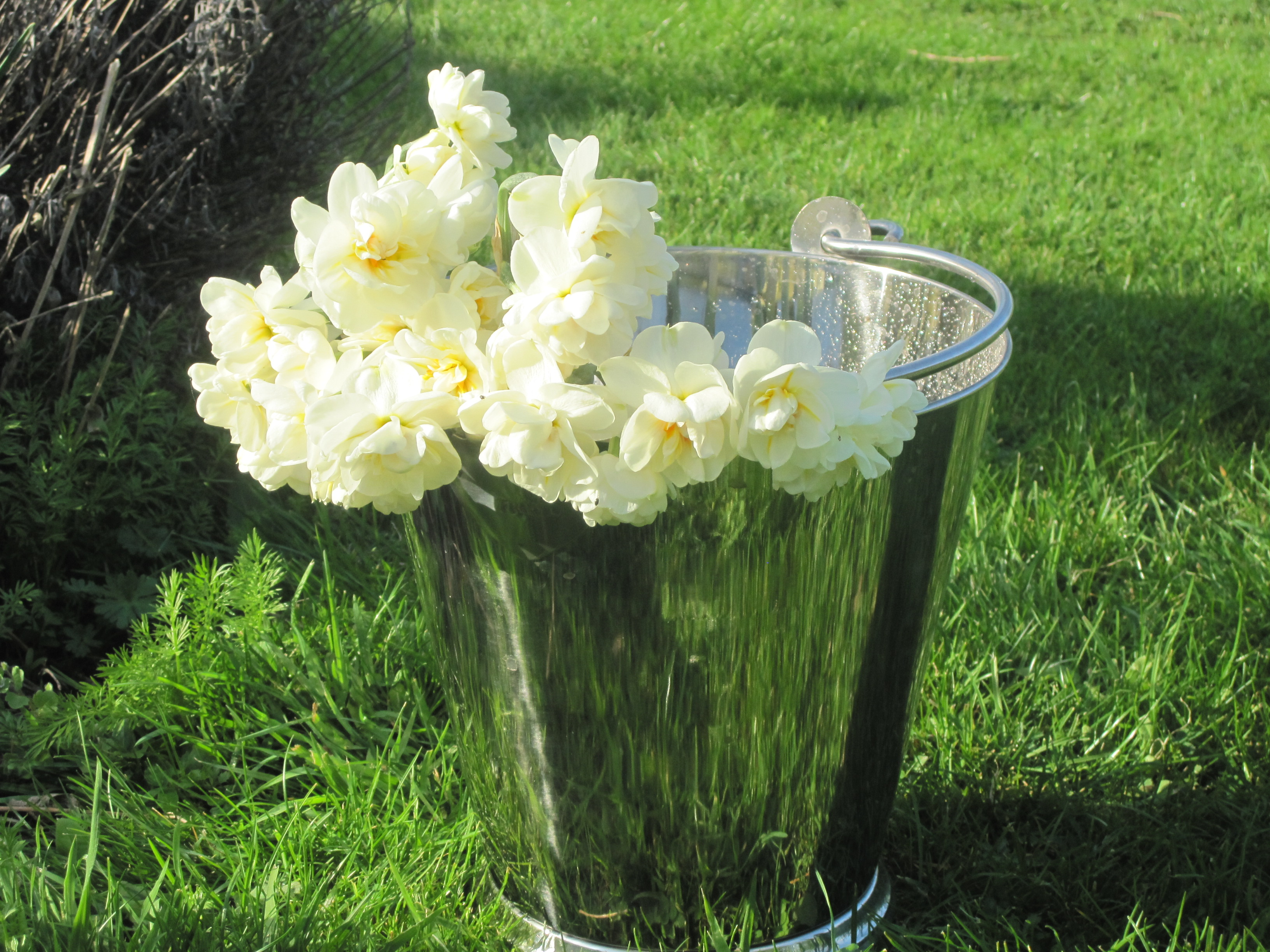 Maximising the vase life of your cut flowers sarah raven once you have cut the flowers you want dont immediately arrange them in a vase put them in a cool place in their bucket of water and let them recover for reviewsmspy