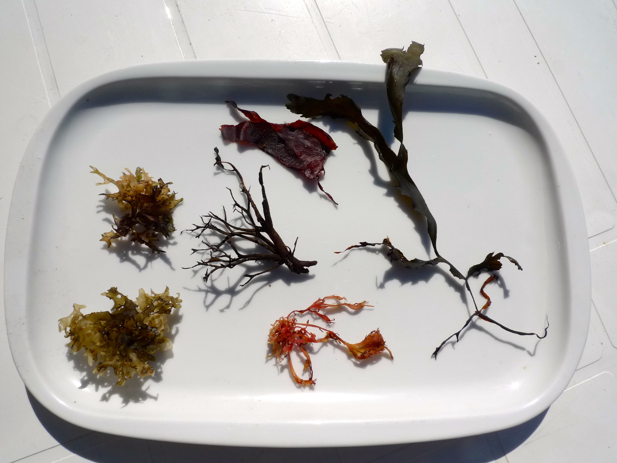 Types of seaweed