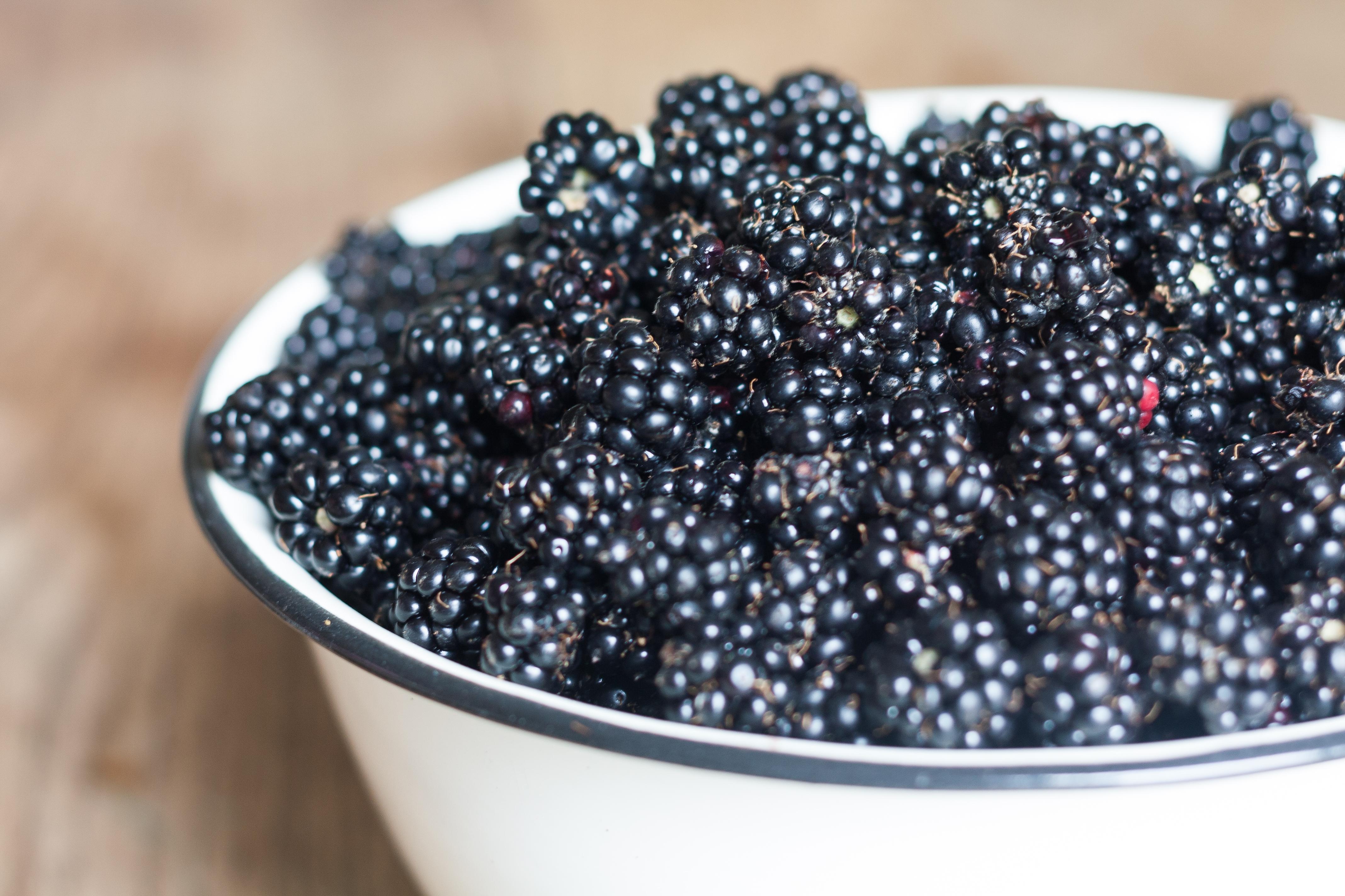 Harvested Blackberries