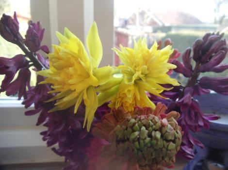 Hyacinths 'woodstock' and 'Jan Boss' picked with Narcissi 'Rip van winkle'