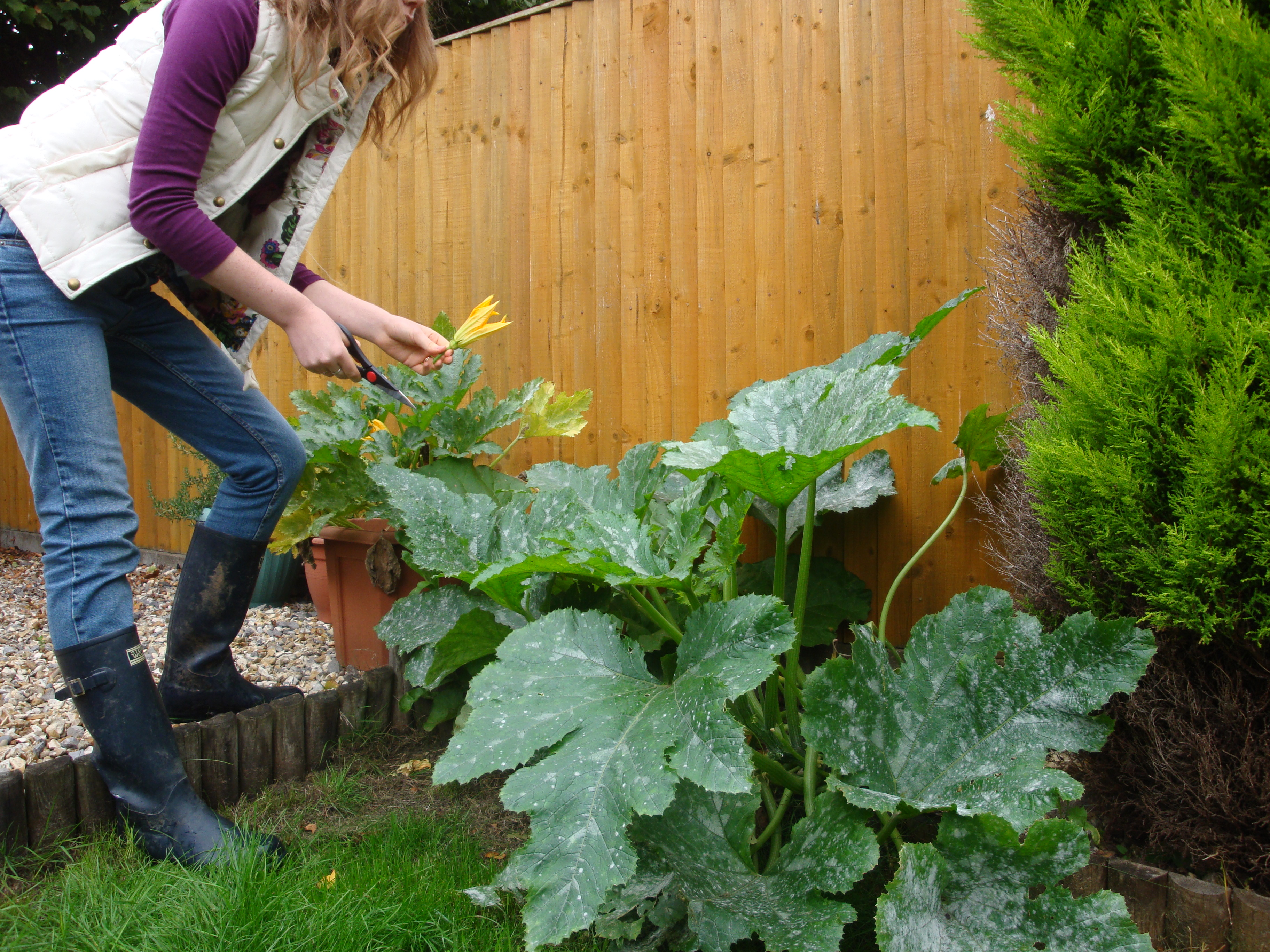 Gardening in a Joules Gilet, Cheap Monday Jeans and Storm Wells Wellington Boots