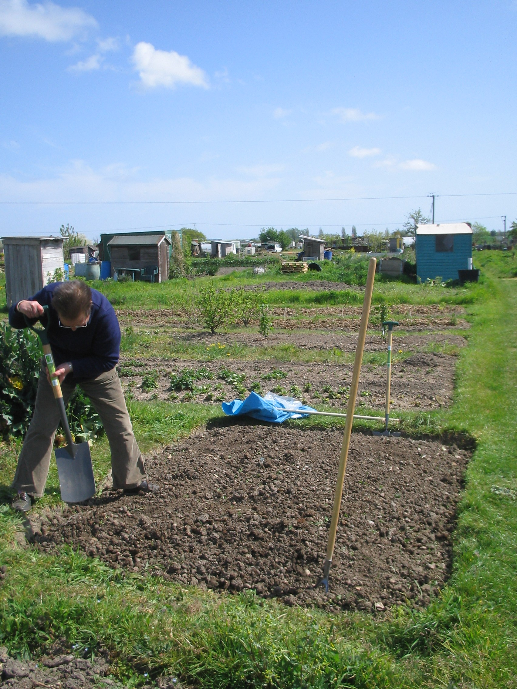 Digging on the Allotment
