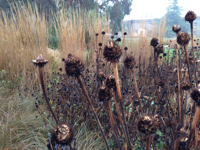 Seedheads in December