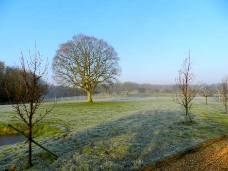 Frosty ground