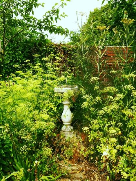 Alexandra's Herb Garden 2013
