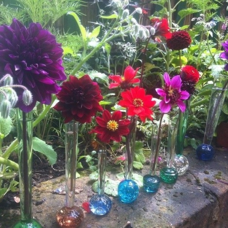 Assortment of cut dahlias in vintage bubble stem glasses