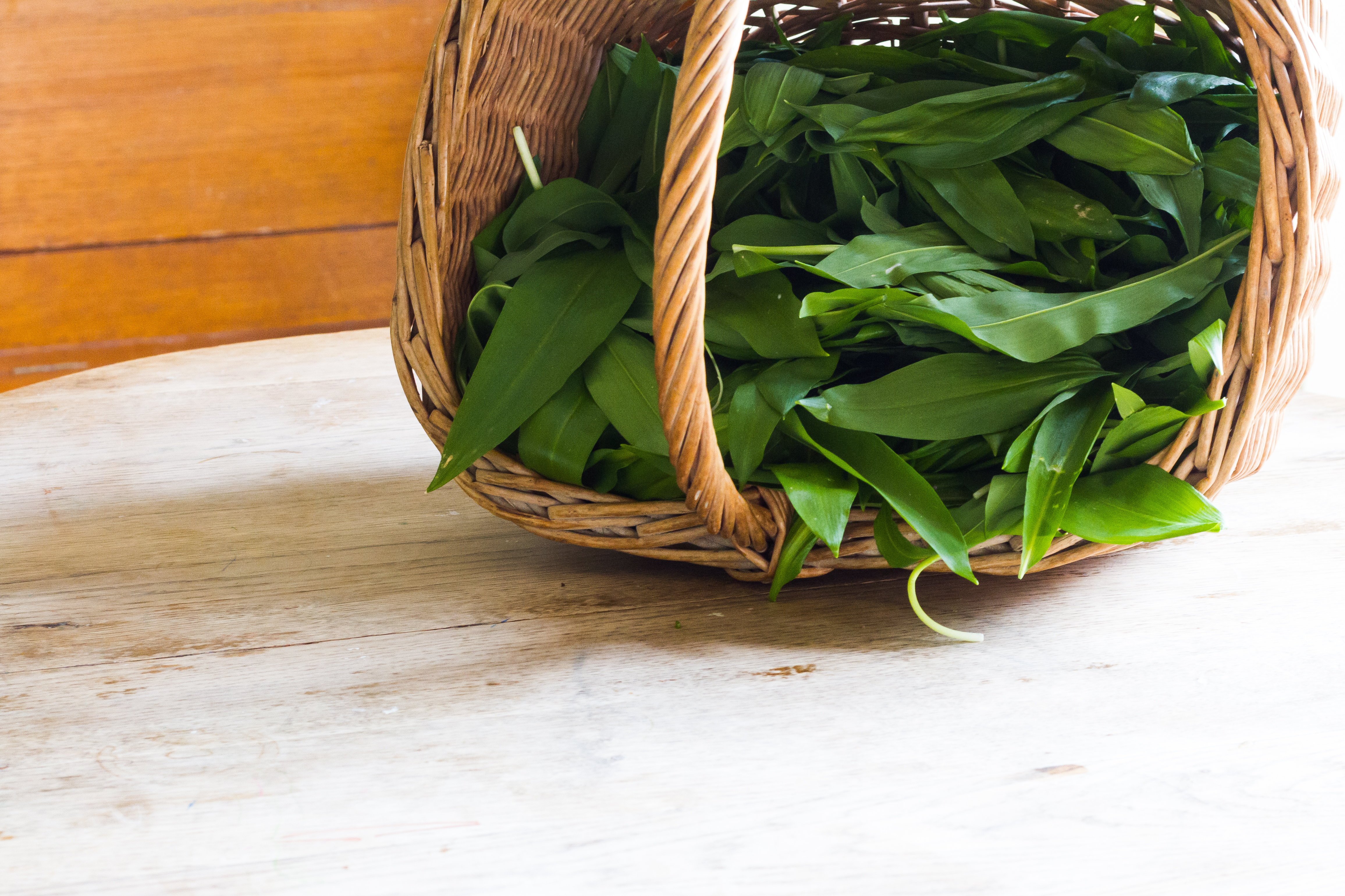 Harvested wild garlic