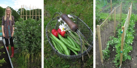 The allotment in June